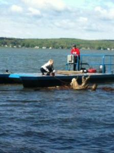 Community Foundation Assists Lake Clean-Up