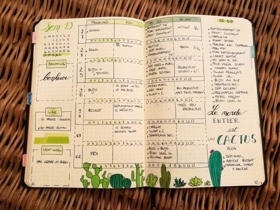 Weekly log - cactus