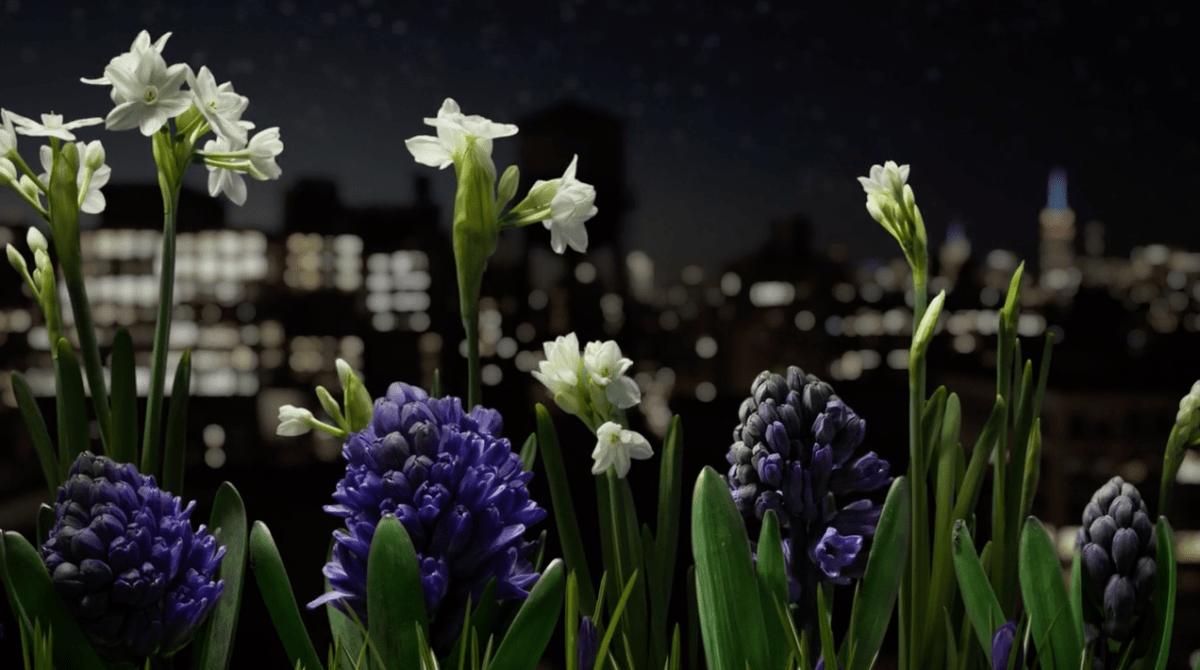 Ce timelapse sur les floraisons du Printemps a demandé 3 ans de travail
