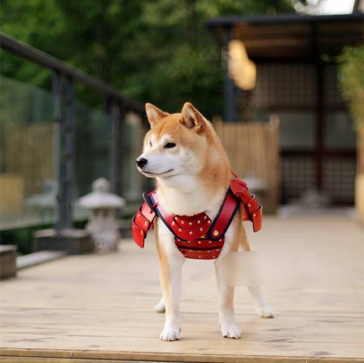 Une armure de samouraï pour les chats et les chiens