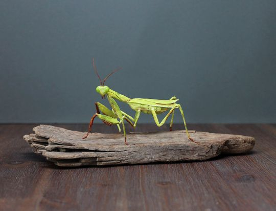 Tina Kraus insectes réalistes en papier
