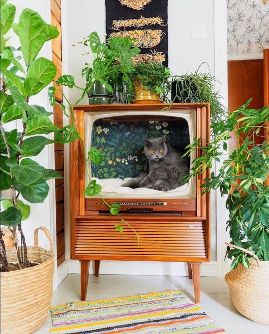 Insolite (et autres bizarreries sans importance) - Page 18 Recycler-television-vintage-chat-1