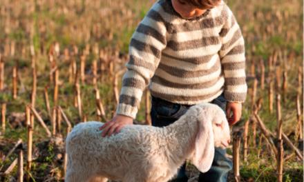 Bio Lana, 100% organic wool