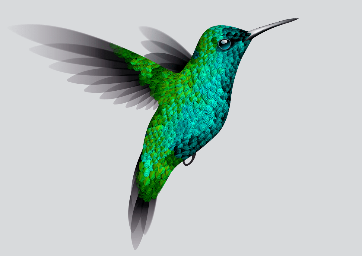 hummingbird diagram of color two wiring illustrator experiment making a create