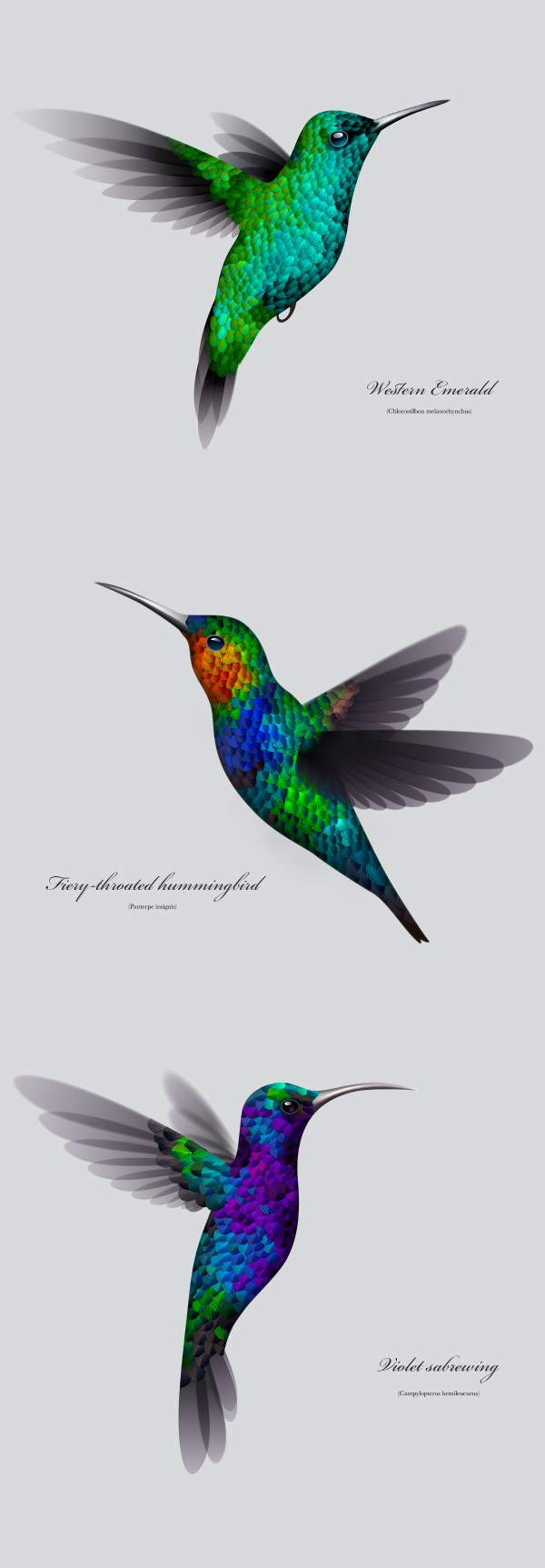 Illustrator Experiment Making Hummingbird Create