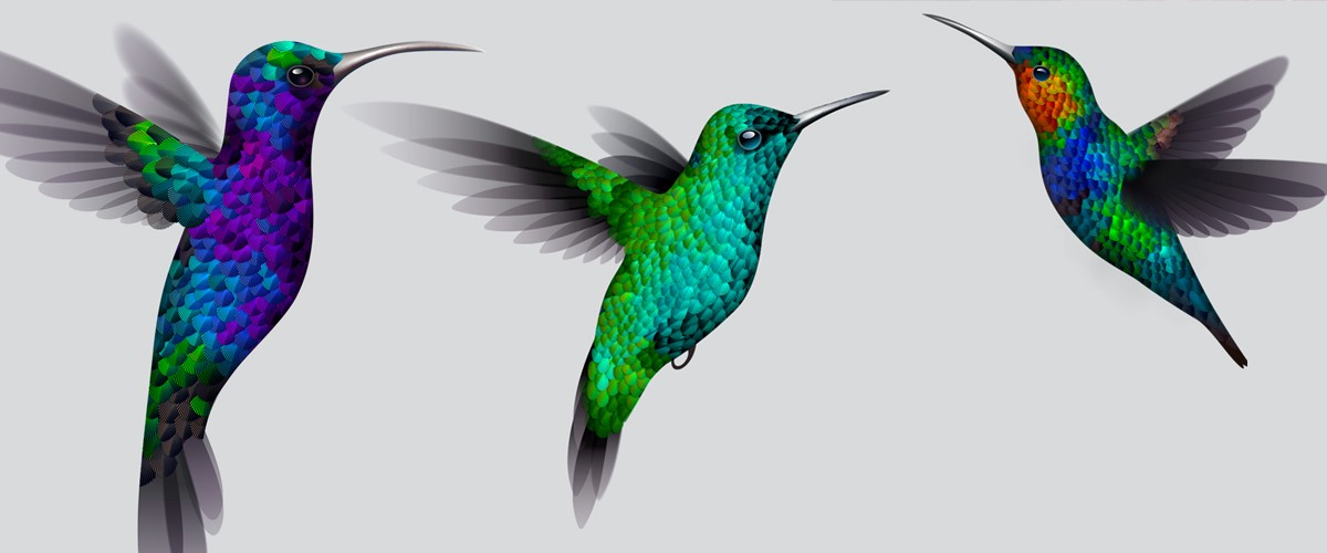hummingbird diagram of color cars wiring diagrams illustrator experiment making a create