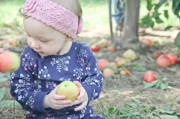 Family Apple Picking Portraits at Beak And Skiff Orchards   LaFayette NY