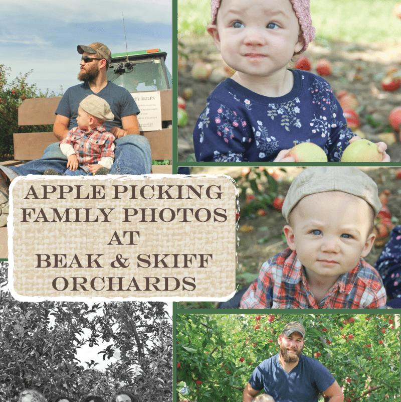 "<span class=""dojodigital_toggle_title"">Apple Picking Family Photos At Beak & Skiff Orchards</span>"
