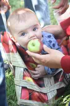 Heinsler Family Apple Picking 2016