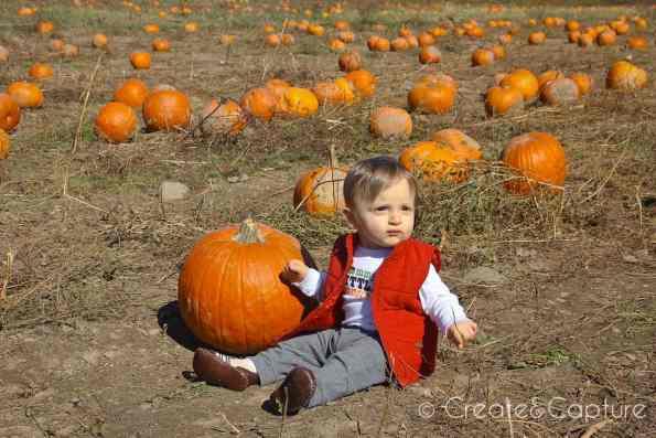 little dante pumpkin picking critz farms cazenovia ny 2016