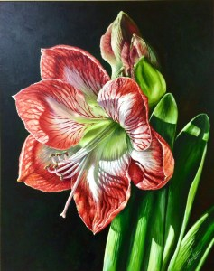 My art create art with me for Repousse amaryllis