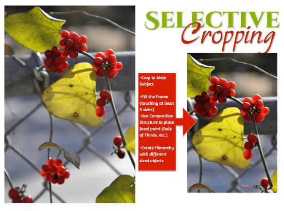 Selective Cropping Composition Lesson