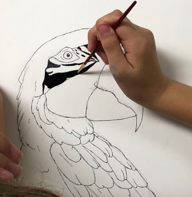 Parrot color contrast art lesson