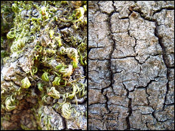 Big Sur Textures