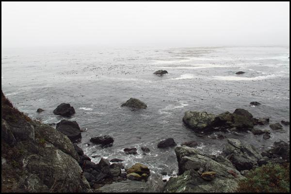 Jade Cove View