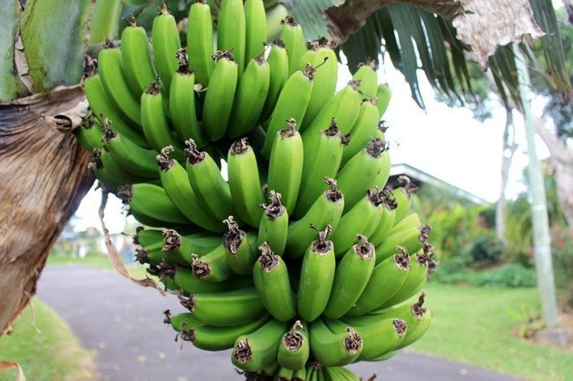 Bananen