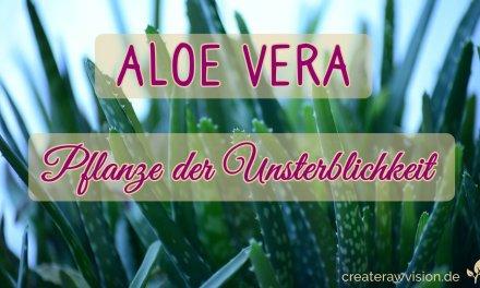 Aloe Vera – Pflanze der Unsterblichkeit