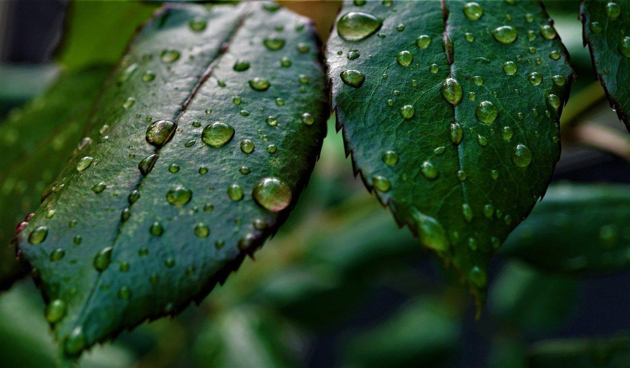Chlorophyll für grüne Smoothies