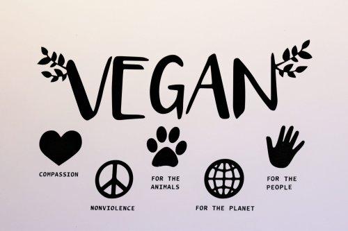 Mundo Vegan 5