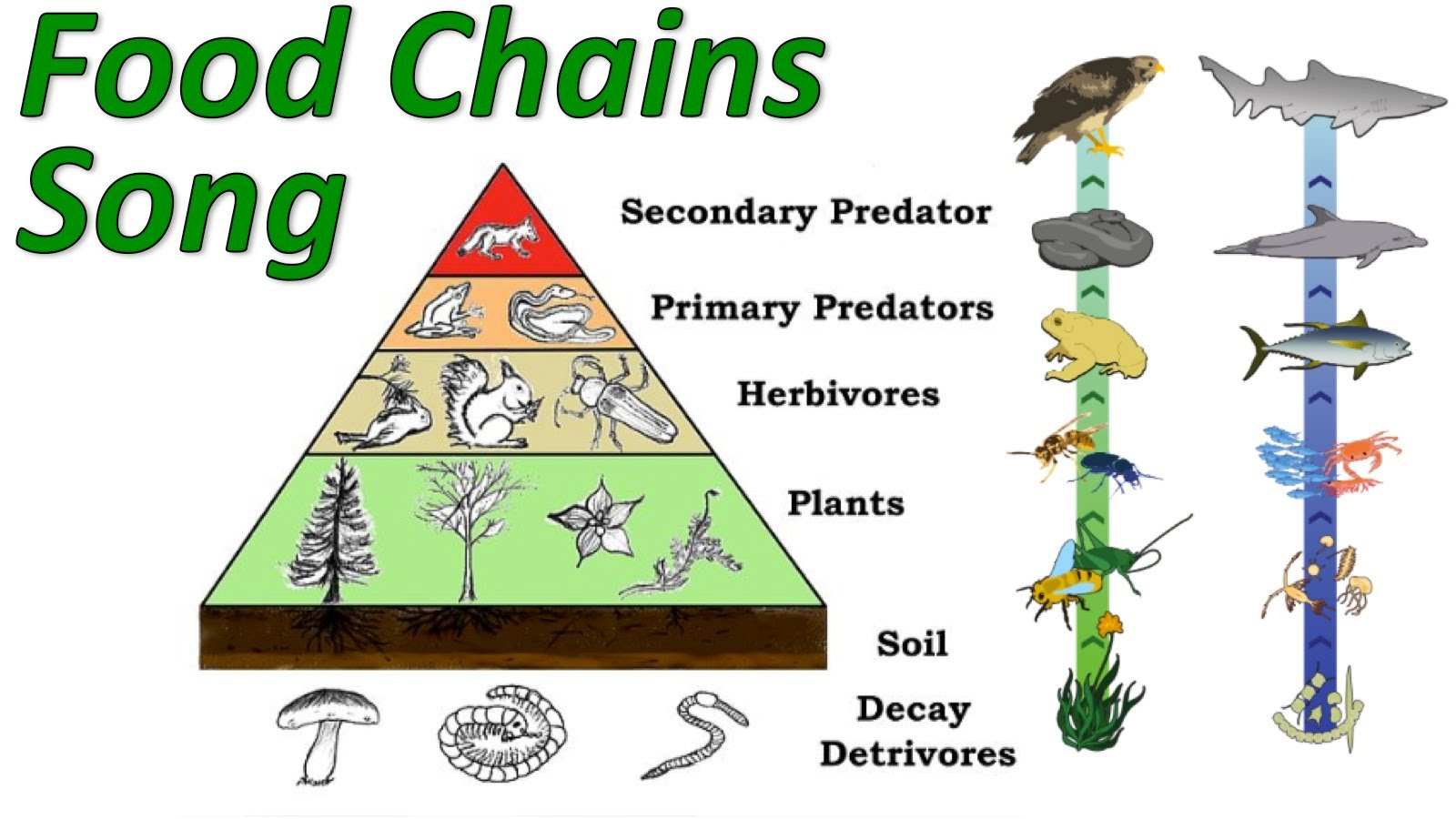 Animal Food Chain