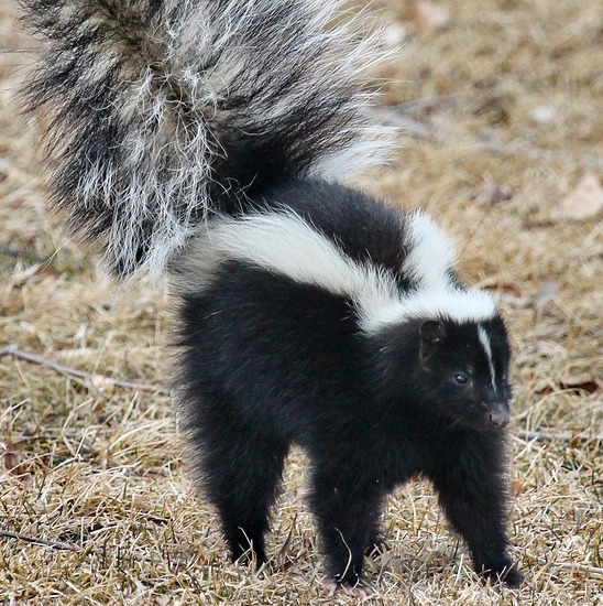 Hey, You! The One With the Skunky Attitude…
