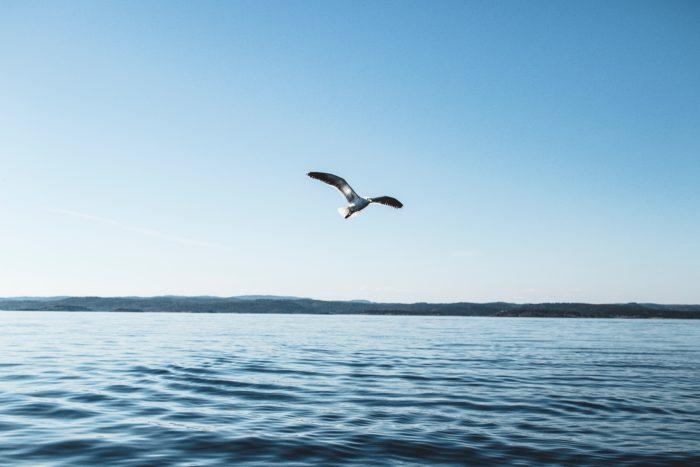 bird soaring over water