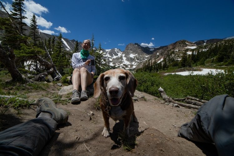 Beagle at Lake Isabelle in Indian Peaks Wilderness