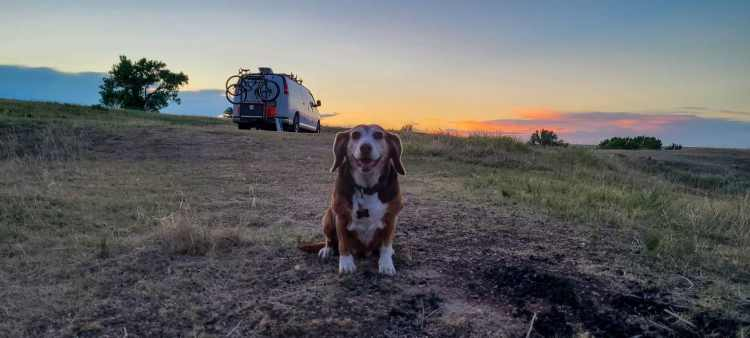 Beagle at campsite