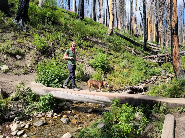 Beagle and owner hiking