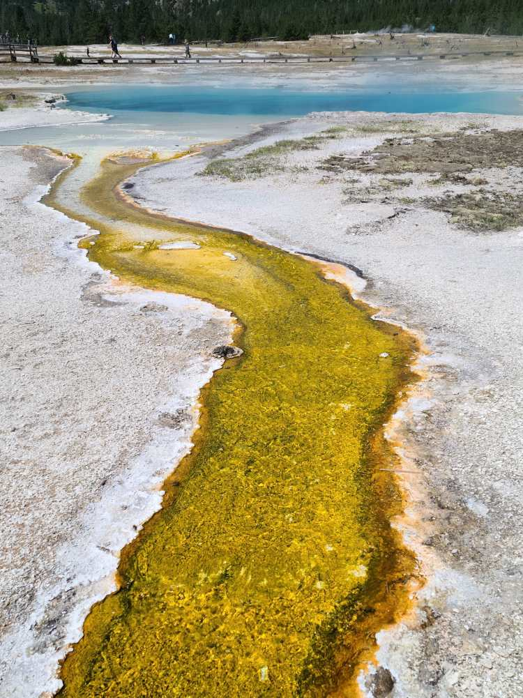 Yellow thermophiles in the runoff of Sapphire Pool at Yellowstone National Park
