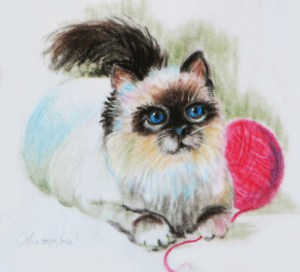 Himalayan Kitten Project Image