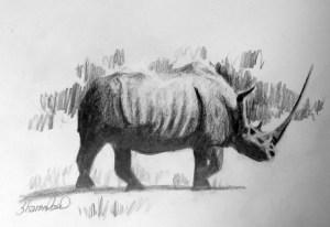 WhiteRhinoceros-ProjectImageDownload