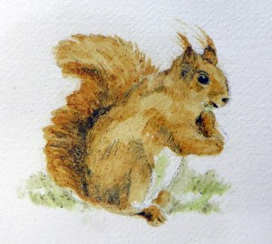 Red Squirrel Project Image