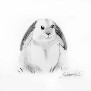 Baby Bunny Project Image