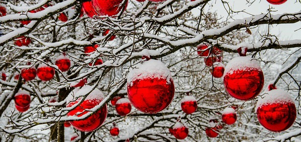 Christmas baubles on snowy branches