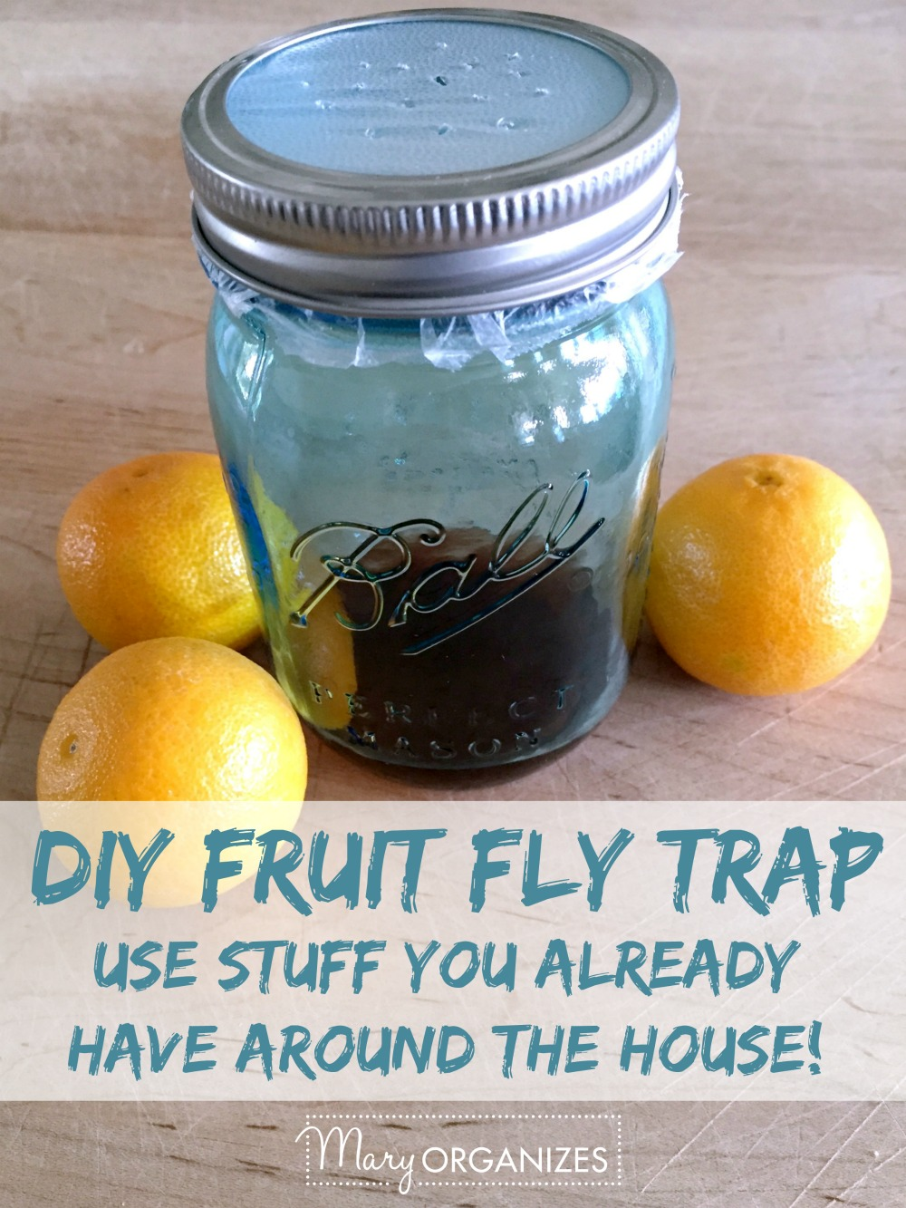 DIY Fruit Fly Trap -v2