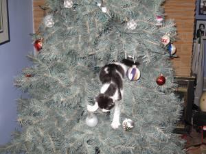 Christmas Tree 66b