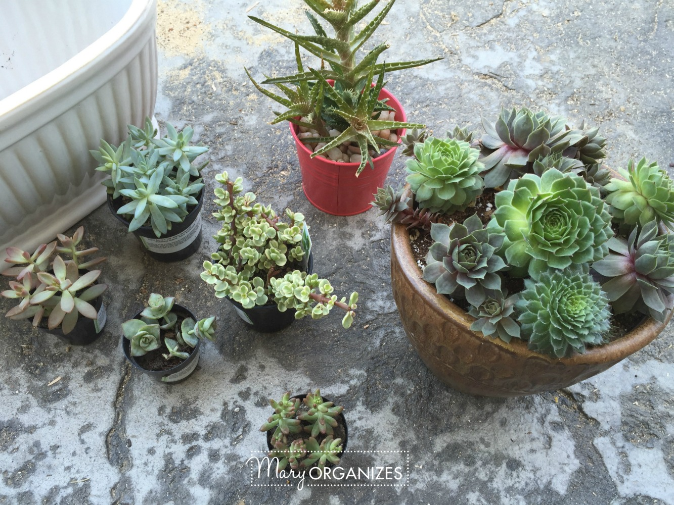 How To Re-Plant Succulents 1