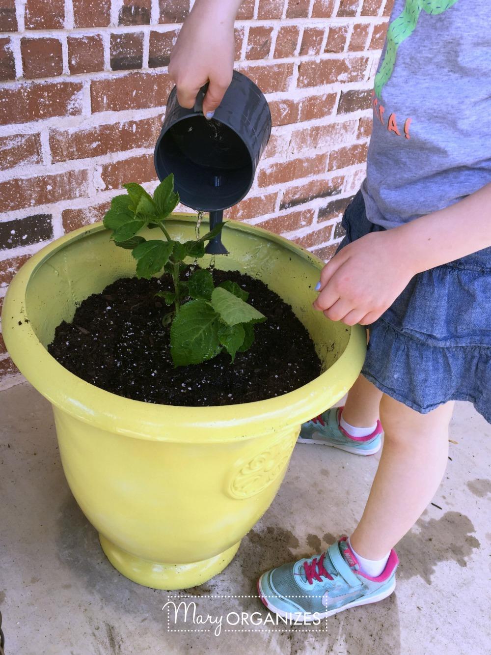 Planter Refresh and Hydrangea Propagation 13