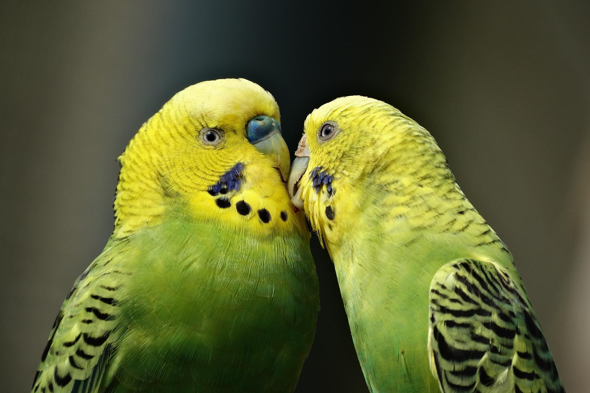 decluttering-as-a-couple-parrots-2