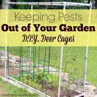 Keeping Pests Out of Your Garden: D.I.Y. Deer Cages