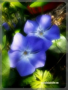 the beauty of the universe in a flower