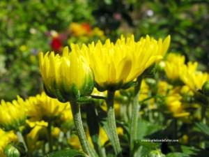 the flowers awake to the morning sun