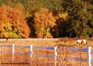 autumn in oregon. shaun brink