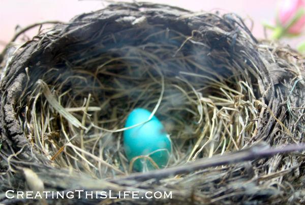 Robin-egg-in-nest