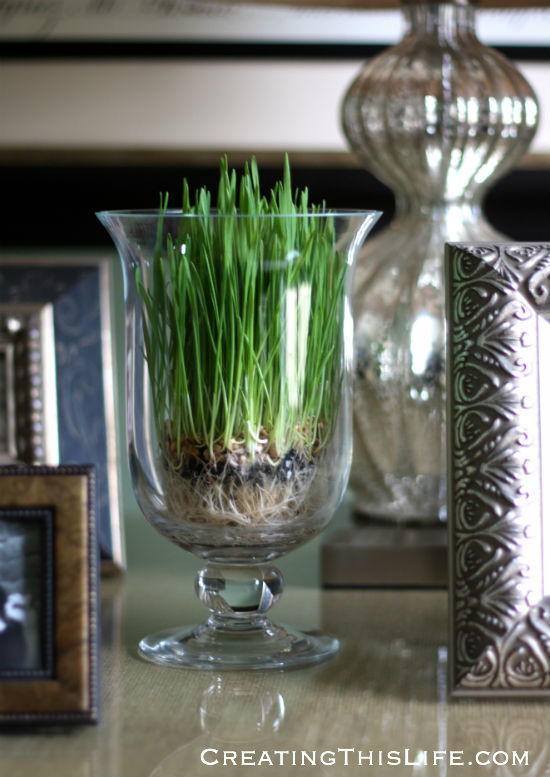 wheat-grass-in-clear-footed-vase