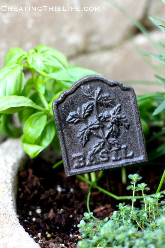 Potted basil with garden marker at CreatingThisLife.com