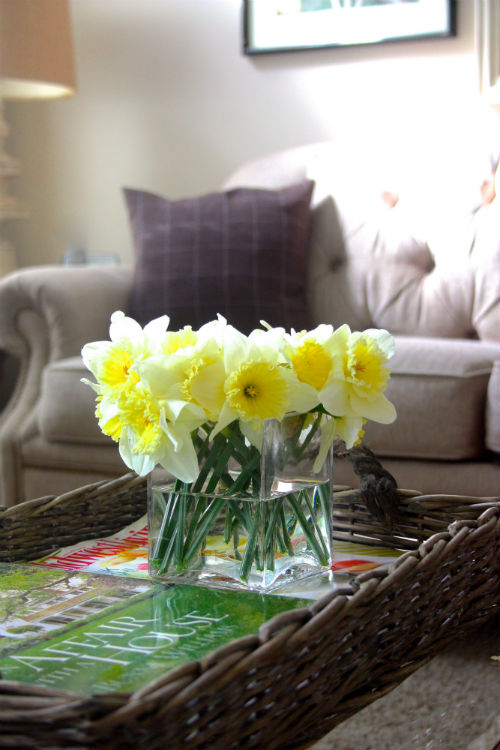 Spring Daffodils at CreatingThisLife.com