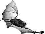 living horseshoe bat
