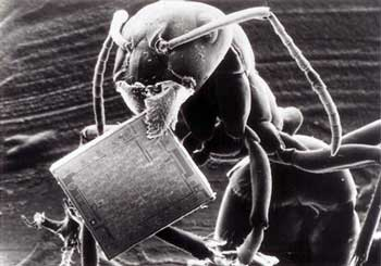 Figure 3. Ant carrying a microchip. Both the ant and the microchip contain information, a non-material entity, that cannot be generated by a material entity and which points to intelligent, creative input. The ant, moreover, contains two non-material parts: information and life. (From: 'Werkbild Philips', with the kind permission of 'Valvo Unternehmensbereich Bauelemente', of Philips GmbH, Hamburg).